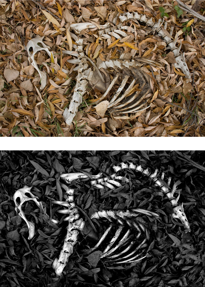 Skeleton - Before and After SMALL