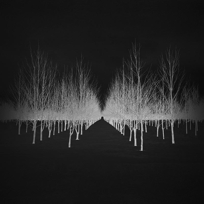 Asemenio silver trees