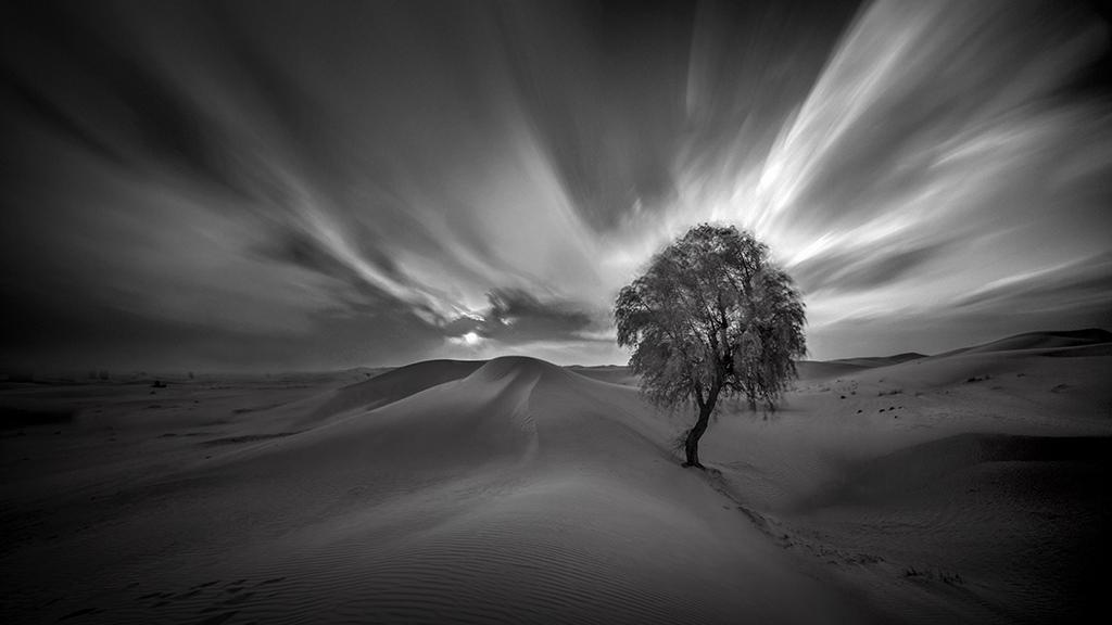 Onederful I - Palm Tree - IR-LE-BW - SZP-JK